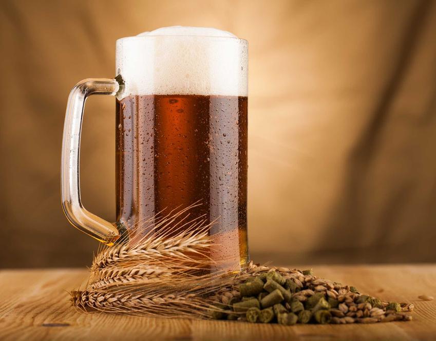 Piwo domowej roboty z pianką w kuflu oraz domowe sposoby i porady, jak zrobić piwo, czyli warzenie piwa w domu- krok po kroku