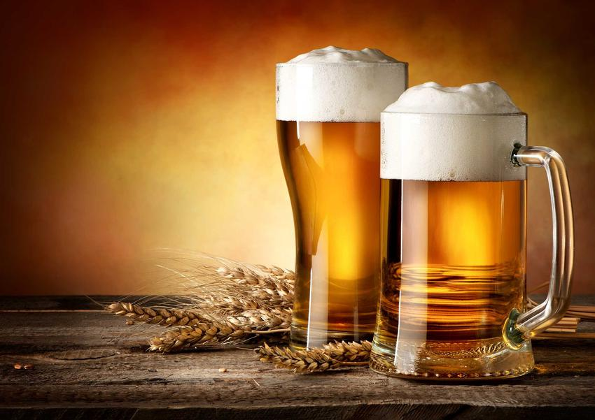 Piwo domowej roboty w kuflach oraz odpowiedź na pytanie, z czego robi się piwo i jaki jest skład piwa