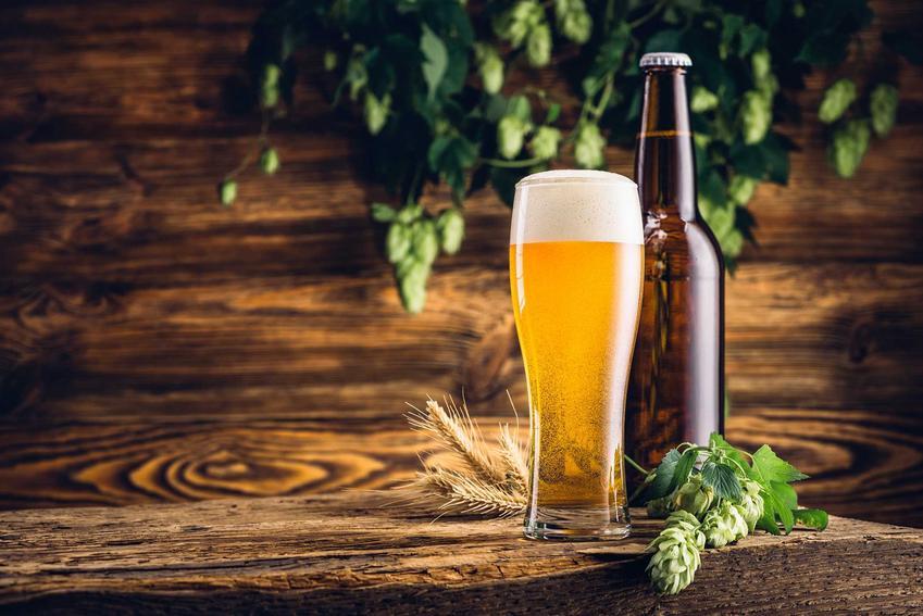 Piwo domowej roboty w kuflu i butelce oraz chmiel i ekstrakt słodowy niezbędny do produkcji piwa domowego krok po kroku