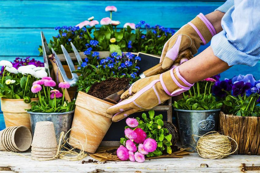 Hydrożel ogrodniczy czy też hydrożel do kwiatów doniczkowych dodawany do doniczki oraz zasady stosowania