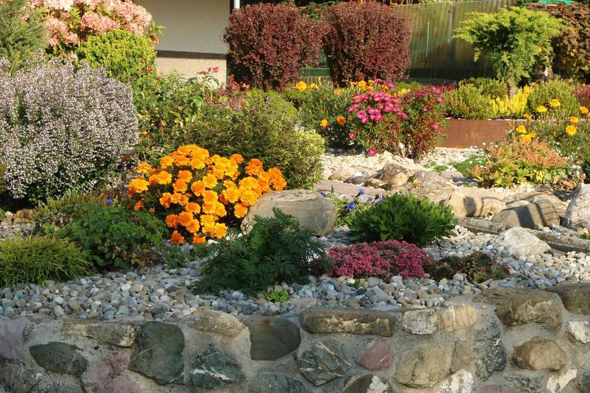 Kwiaty na skalniak ogrodowy, które pięknie się na nim prezentują, tym kwiaty wieloletnie i ich wymagania