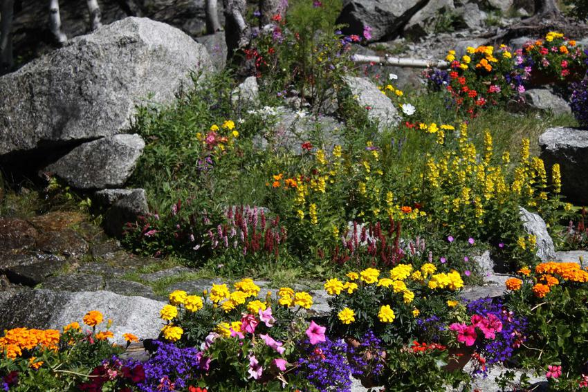 Kwiaty na skalniak ogrodowy, które pięknie się na nim prezentują, tym kwiaty wieloletnie oraz ich wymagania w ogrodzie