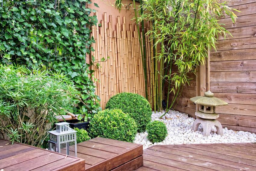 Bambus ogrodowy, czyli bambus w ogrodzie w towarzystwie bluszczu i krzewów, a także uprawa i pielęgnacja bambusa