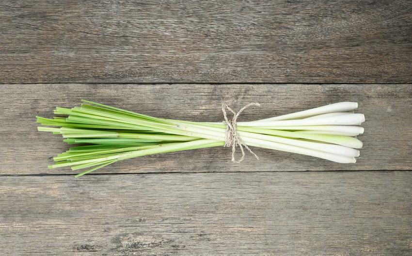 Trawa cytrynowa czy też paltaczka cytrynowa na deskach oraz jej uprawa w ogrodzie i zastosowanie w kuchni