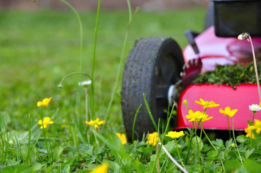Koszenie trawy w ogrodzie i czerowna kosiarka oraz zalecana wysokość koszenia trawy jesienią i wiosną oraz częstotliwość