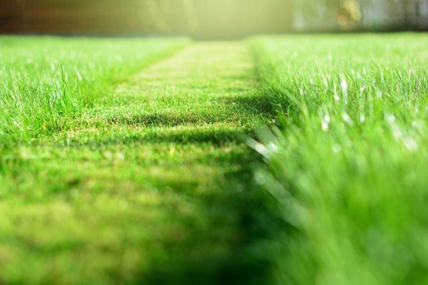 Rodzaje traw i gatunki trawy do ogrodu, w tym trawy ozdobne, trawy łąkowe i trawy na trawnik przydomowy