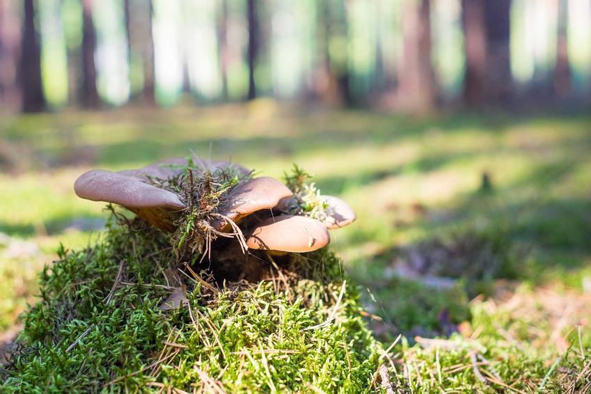 Mikoryza, a dokładniej grzyby mikoryzowe i ich zastosowanie w ogrodzie na przykład jako mikoryza do iglaków