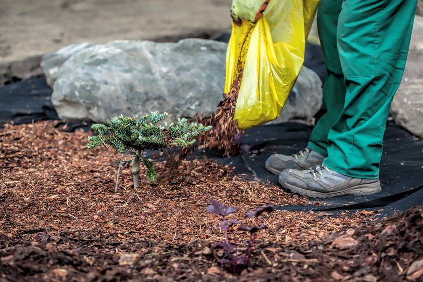 Mikoryza czy też grzyby mikoryzowe oraz ich zastosowanie w ogrodzie jako mikoryza do iglaków, oraz inne zastosowania mikoryzy