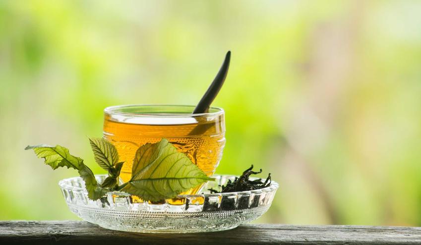 Herbata z morwy czy też herbatka z morwy białej oraz jej działanie lecznicze, zastosowanie i właściwości