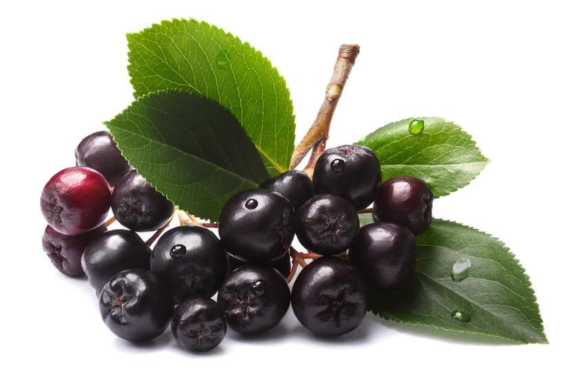 Aronia czarna na białym tle, czyli owoce aronii i ich właściwości oraz wartości odżywcze i najlepsze przepisy na zdrowotne przetwory