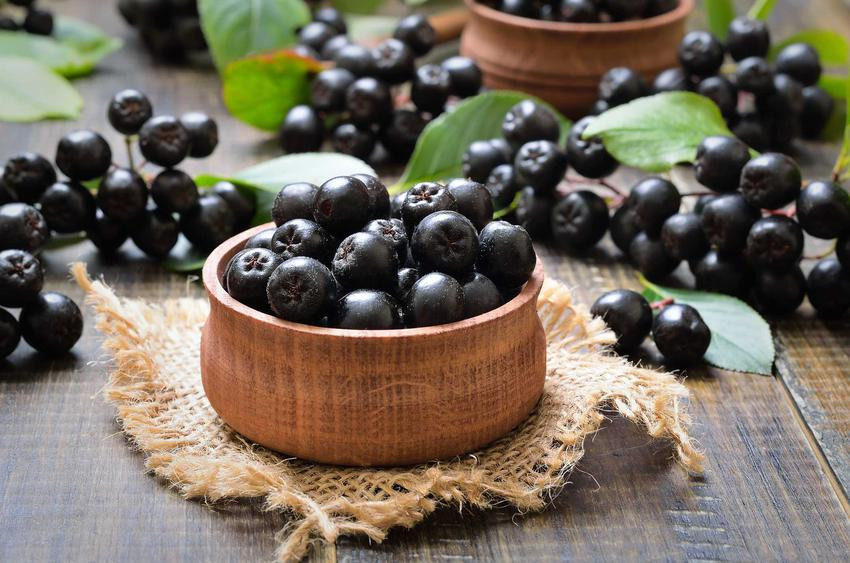 Aronia czarna w miseczce, czyli owoce aronii i ich właściwości lecznicze, a także wartości odżywcze oraz zastosowanie