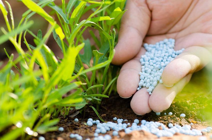 Potasowe nawozy sztuczne przy nawożeniu oraz skłaniki nawozów sztucznych, a także ceny nawozów sztucznych