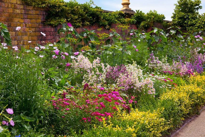 Kompozycja różnokolorowych bylin ogrodowych, w tym przede wszystkim byliny kwitnące oraz byliny wieloletnie i ich uprawa
