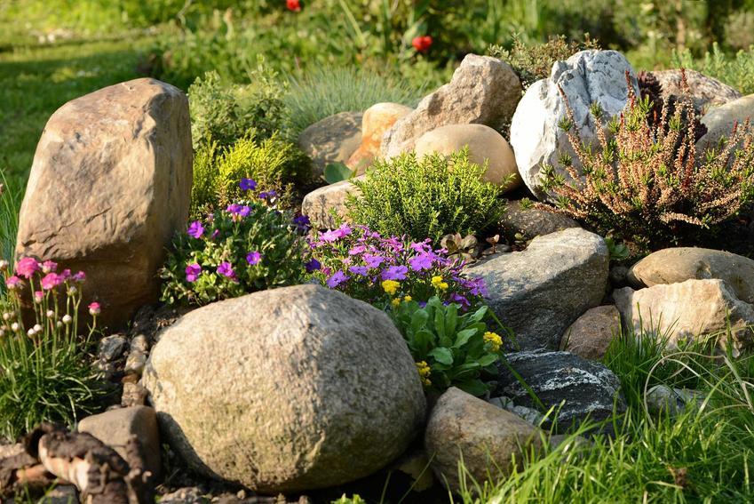 Byliny ogrodowe, w tym byliny kwitnące jako rośliny na skalniak, a także byliny wieloletnie i ich uprawa, sadzenie, pielęgnacja