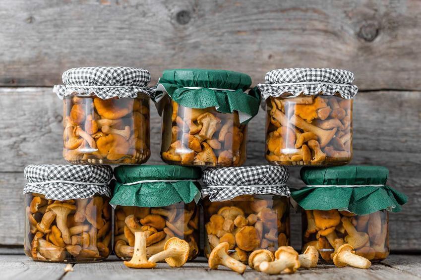 Przetwory z grzybów kurek w słoikach, czyli przetwory grzybowe i najlepsze przepisy na przetwory z grzybów leśnych