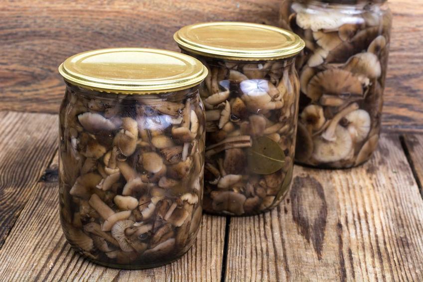 Przetwory z grzybów w słoikach, czyli przetwory grzybowe i najlepsze przepisy na przetwory z grzybów leśnych