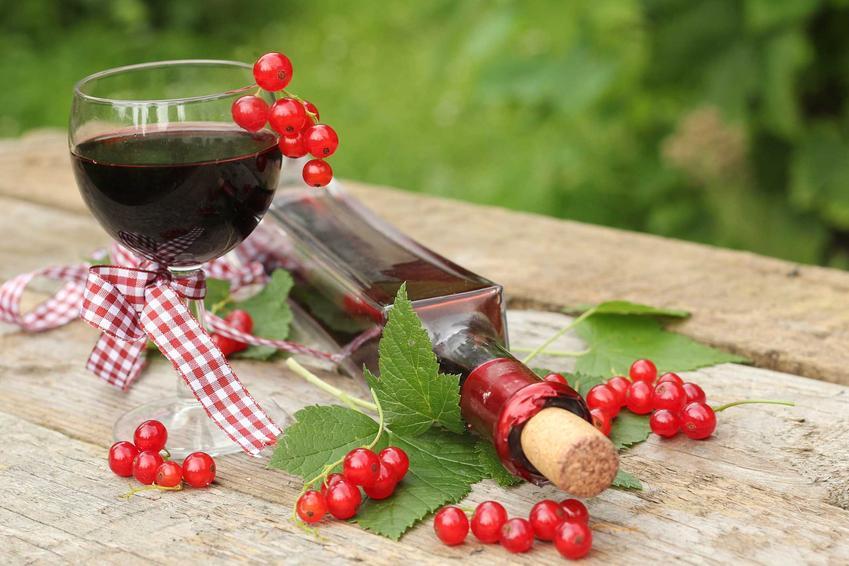 Wino z porzeczek w kiliszku i w butelce oraz przepis na wino domowe z czerwonej porzeczki, czarnych czy białych