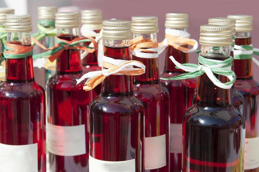 Nalewka z rabarbaru czy też nalewka rabarbarowa w zakręconych butelkach oraz przepisy na nalewkę rabarbarową