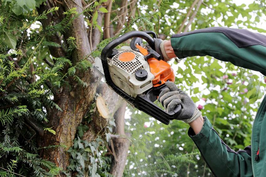 Piła spalinowa podczas przycinania drzewa przez mężczyznę oraz polecane piły spalinowe różnych marek, a także opinie na ich temat