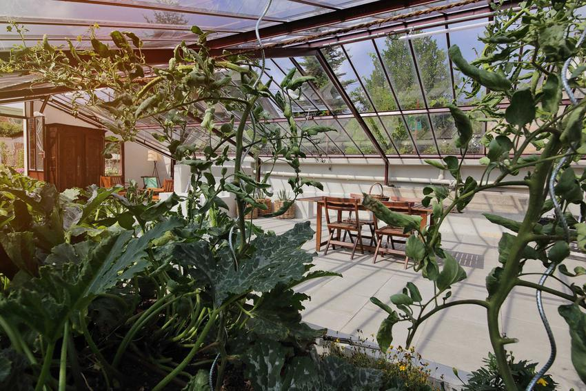 Oranżeria ogrodowa z zielonymi roślinami, czyli modne szklarnie ogrodowe oraz projekty oranżerii i budowa oranżerii