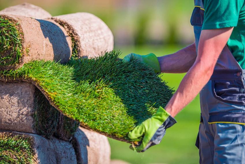 Trawa z rolki na trawnik rolowany sprawdzany przez mężczyznę oraz układanie trawy w ogrodzie oraz cena trawy z rolki