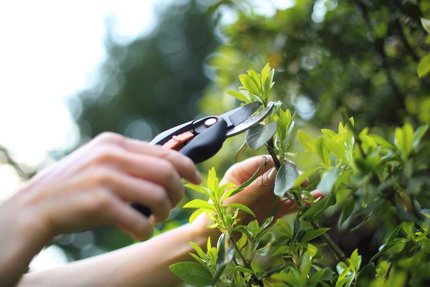 Sekator ogrodowy ręczny czyli rodzaje, modele sekatorów ogrodowych oraz wykorzystanie i zastosowanie sekatorów do róznych prac ogrodowych