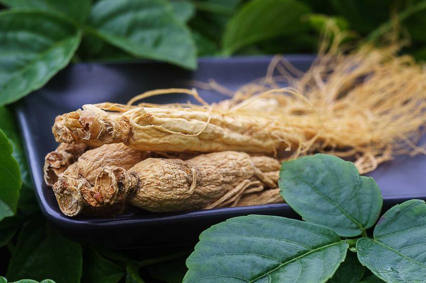 Żeń szeń syberyjski w ogrodzie oraz działanie żeń szenia syberyjskiego oraz uprawa i właściwości lecznicze korzenia