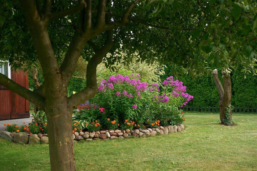 Klomb czy też kwietnik w ogrodzie podczas kwitnienia oraz inspiracje na klomby w ogrodzie, na przykład kwietniki z opony