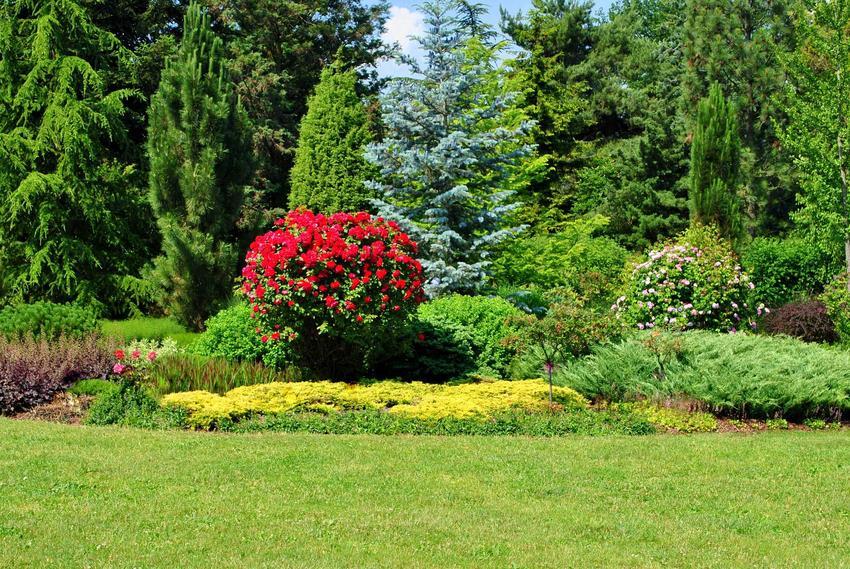 Kwietnik czy też klomb w ogrodzie podczas kwitnienia kwiatów oraz pomysły na klomby w ogrodzie, na przykład kwietniki z opony