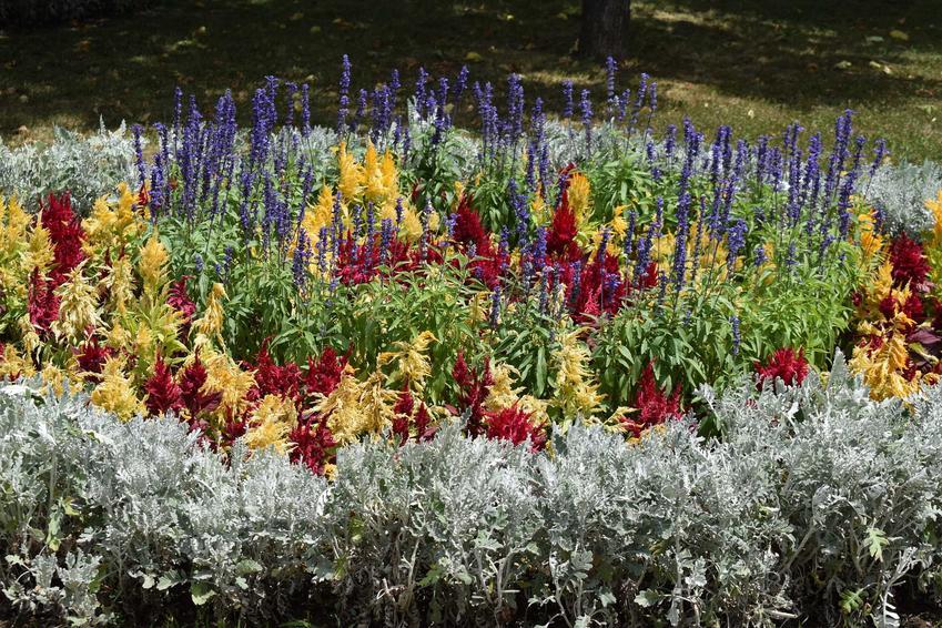 Klomb, czyli kwietnik w ogrodzie podczas kwitnienia oraz inspiracje na klomby w ogrodzie, na przykład kwietniki z opony