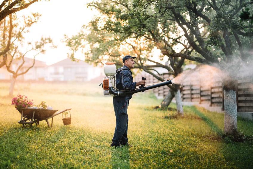 Opryskiwacz spalinowy, czyli opryskiwacz plecakowy spalinowy używany przez mężczyznę w ogrodzie oraz rodzaje i ceny