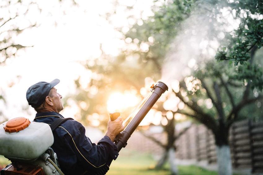 Opryskiwacz spalinowy, a dokładniej opryskiwacz plecakowy spalinowy używany przez mężczyznę w ogrodzie