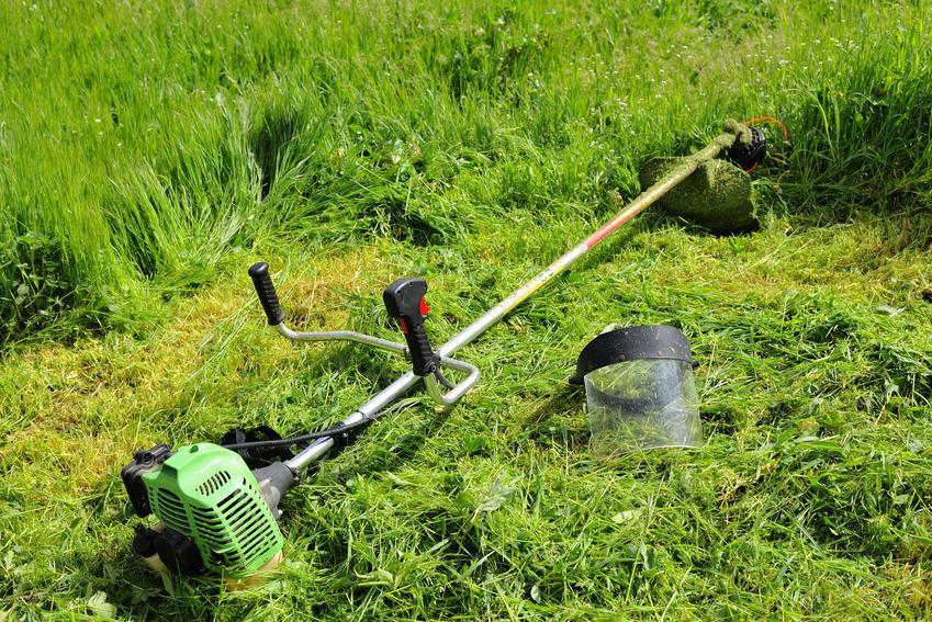 Kosiarki spalinowe do trawy na wystawie w sklepie oraz cechy, jakimi powinna się wyróżniać kosiarka spalinowa
