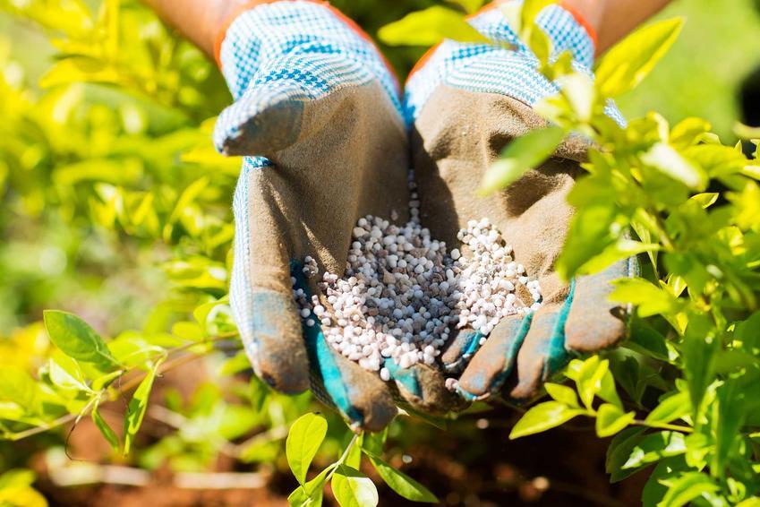 Nawóz azofoska granulat na dłoniach ogrodnika w rękawicach oraz jego zastosowanie i dawkowanie krok po kroku