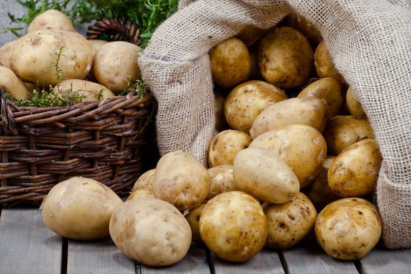 Ziemniaki w worku, a także odmiany ziemniaków jadalnych, czyli gatunki ziemniaków w Polsce i ich charakterystyka