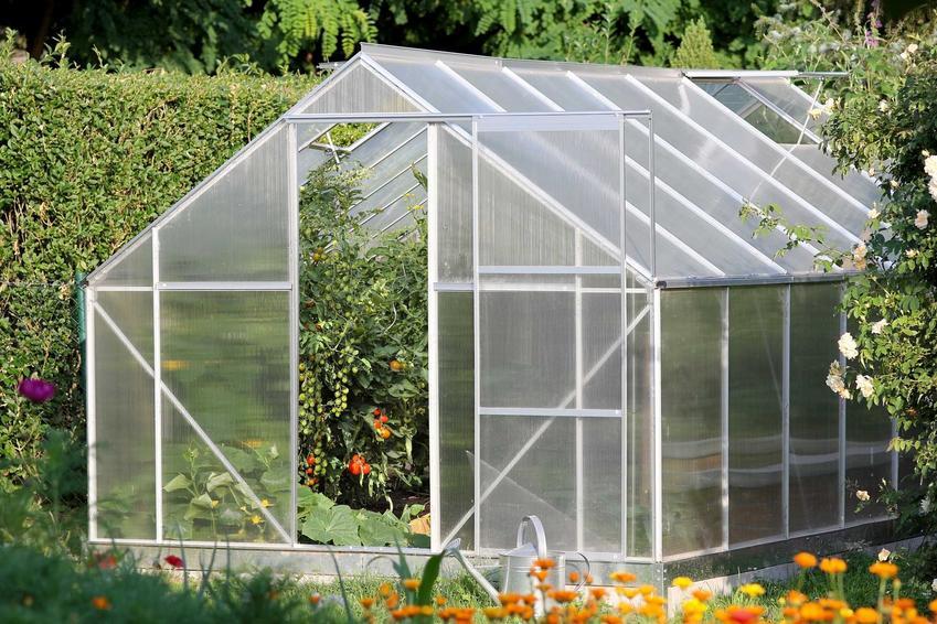 Szklarnia w ogrodzie i pomidory w szklarni, czyli uprawa pomidorów szklarniowych krok po kroku oraz porady