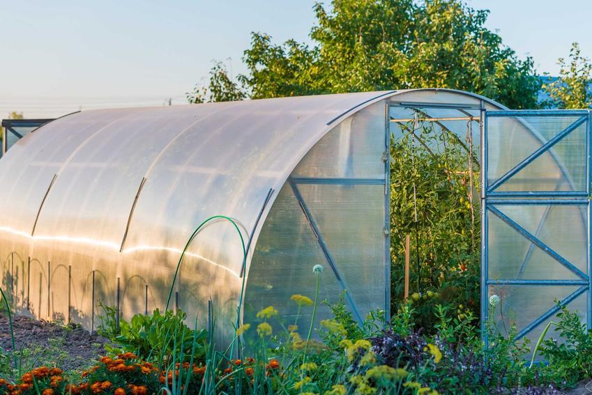 Szklarnia w ogrodzie, a także urawa ogórków w szklarni, uprawa pomidorów w szklarni oraz innych warzyw, a także porady, co sadzić w szklarni