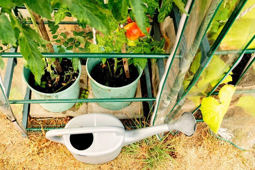 Mini szklarnia na balkonie oraz szklarnie balkonowe, a także uprawa pomidorów w szklarni i innych warzyw