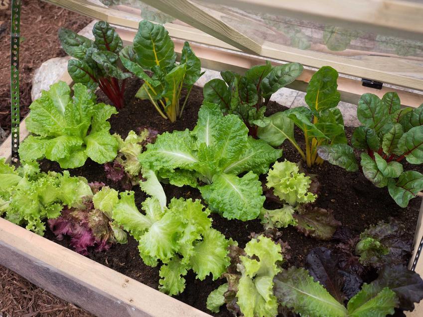 Mini szklarnia na balkonie oraz polecane szklarnie balkonowe oraz uprawa pomidorów w szklarni i innych warzyw