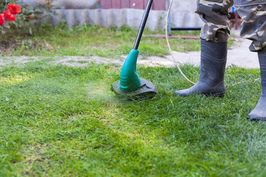 Podkaszarka elektryczna na trawie podczas pracy, a także podkaszarki spalinowe i polecane podkaszarki elektryczne i opinie na ich temat