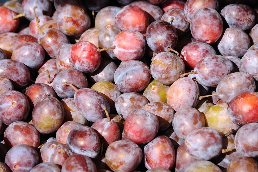 Śliwki w skrzynce, a także śliwa japońska lub azjatycka odmiana śliwy Prunus salicina oraz jej odmiany, uprawa i pielęgnacja