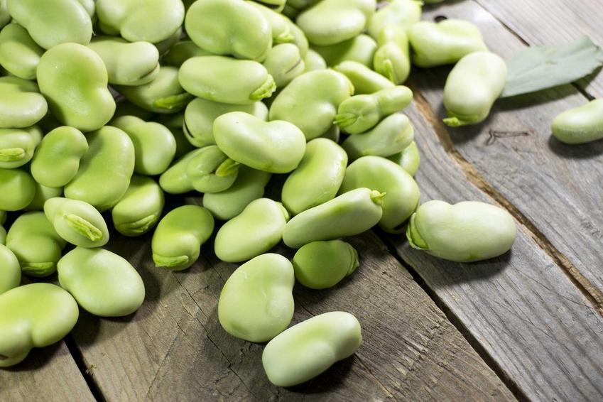Świeży bób, a także uprawa bobu w ogrodzie, czyli sadzenie bobu oraz porady, jak uprawiać bób krok po kroku