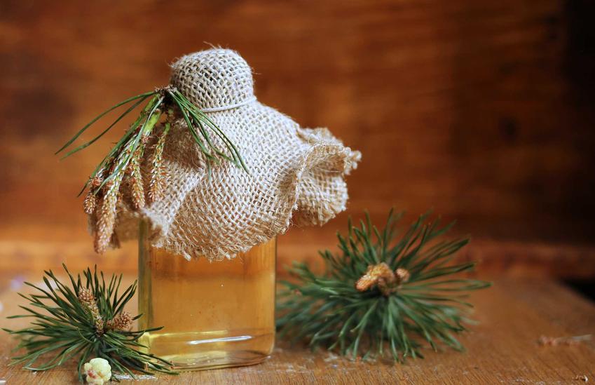 Syrop z szyszek sosny oraz syrop z zielonej szyszki sosny a także inne przepisy na syrop sosnowy i jego właściwości lecznicze