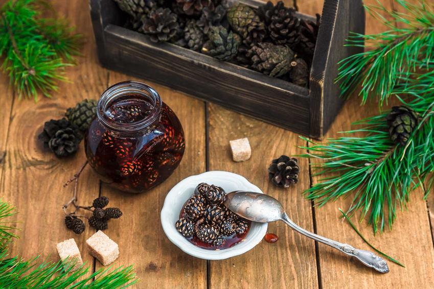 Syrop z szyszek sosny oraz syrop z zielonej szyszki sosny i najlepsze przepisy na sosnowy syrop na przeziębienie