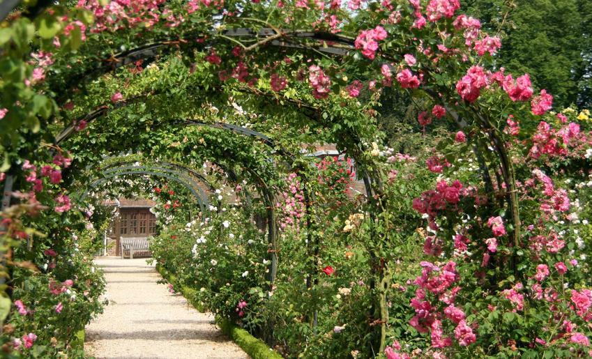 Róże pnące długo kwitnące oraz róże rabatowe i róże okrywowe i ich uprawa i pielęgnacja w ogrodzie krok po krokuRóże pnące długo kwitnące oraz róże rabatowe i róże okrywowe i ich uprawa i pielęgnacja w ogrodzie krok po kroku