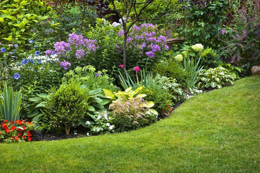 Najlepsze krzewy kwitnące wiosną i latem, czyli polecane krzewy kwinące od wiosny do jesieni i najlepsze rośliny do ogrodu
