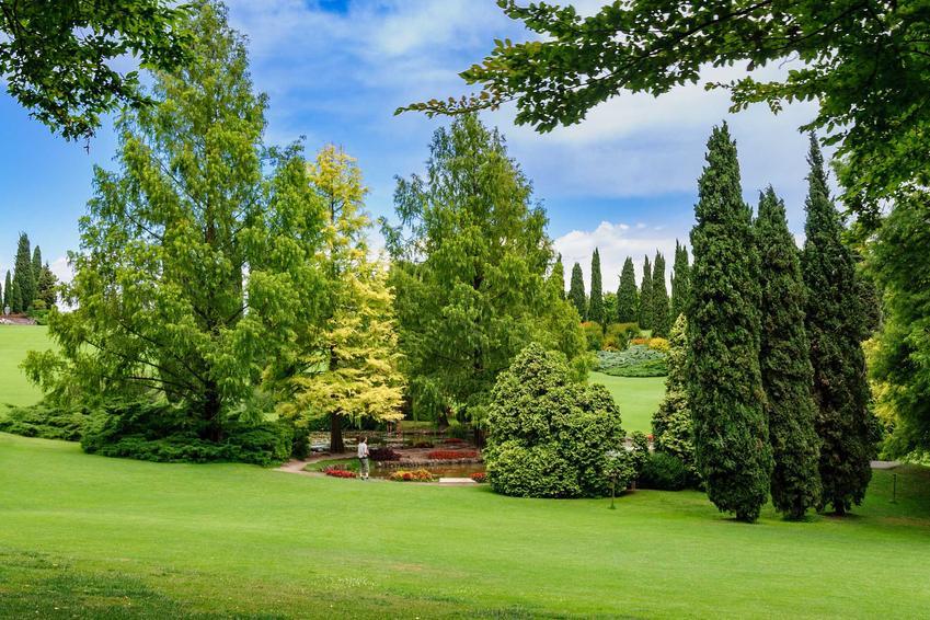 Drzewa ozdobne do ogrodu w postaci drzew iglastych, czyli polecane drzewa i krzewy ozdobne, w tym drzewka ozdobne i odmiany