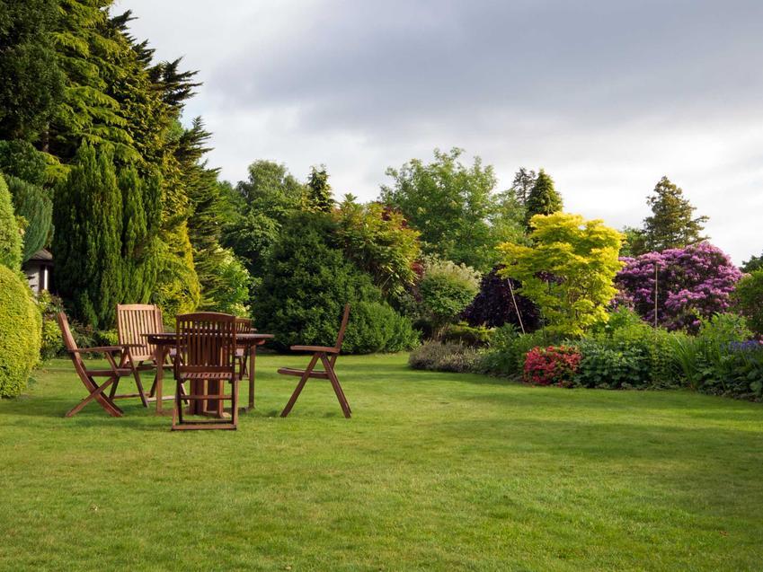 Drzewa ozdobne do ogrodu, czyli polecane drzewa i krzewy ozdobne, w tym drzewka ozdobne i konkretne odmiany