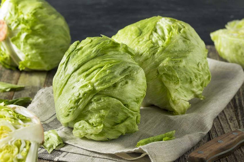 Sałata lodowa - dowiedz się, w jaki sposób sadzić i uprawiać sałatę lodową oraz nasiona i rozsady sałaty