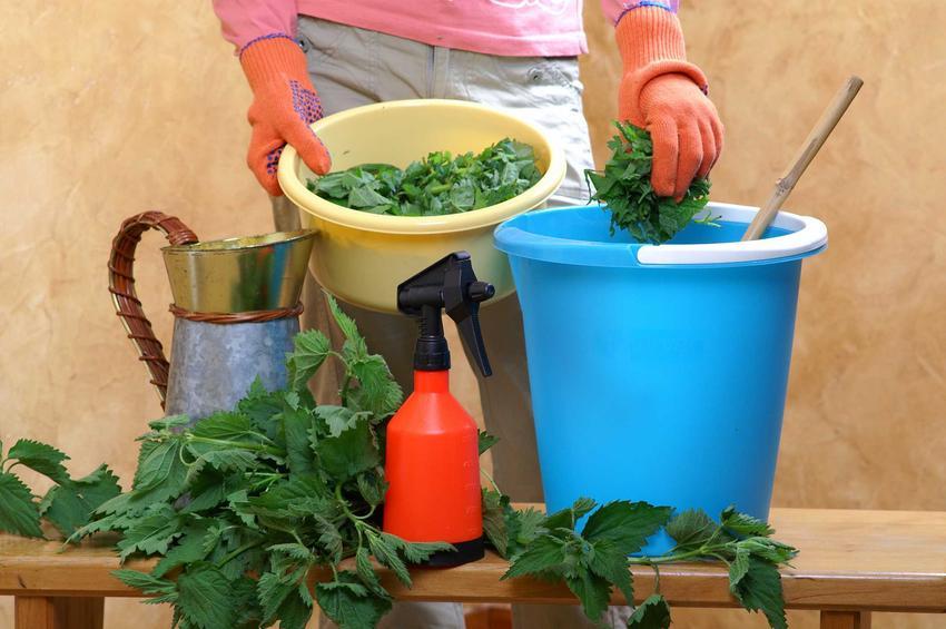 nojówka z pokrzyw czy gnojówka z pokrzywy podczas przygotowania, a także nawóz z pokrzyw oraz skład, proporcje i zastosowanie